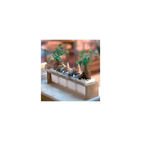 Plint 4 ramequins - 1086